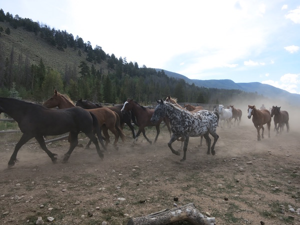 horses-running-in-at-rawah-ranch