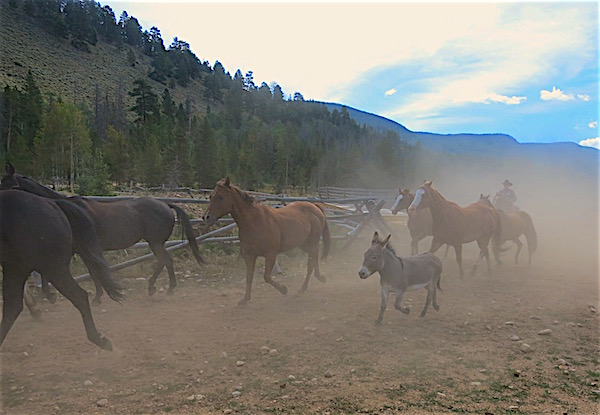 leon-coming-in-with-the-horses-rawah-ranch