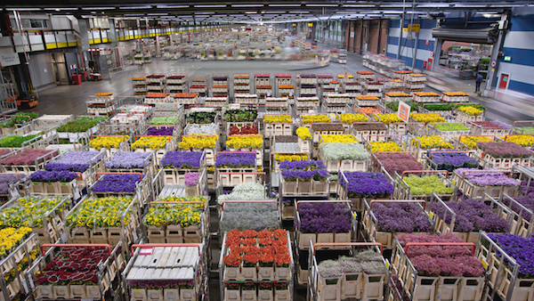 airplanes_amsterdam_flower_warehouse_carts_4k