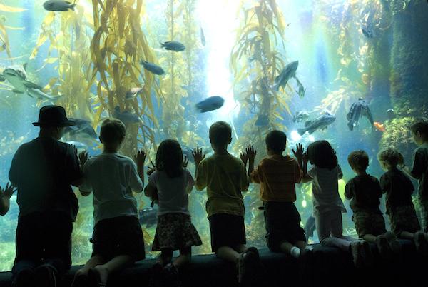 Birch Aquarium-children-Courtesy Birch Aquarium