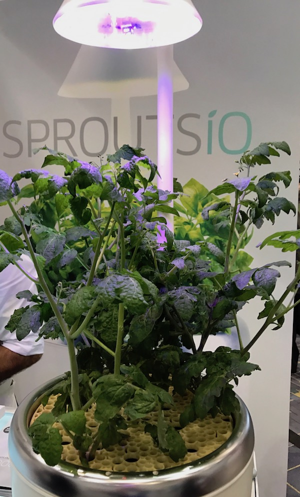 Sprouts io IHHS