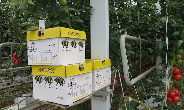 Mighty Vine Bee Hives