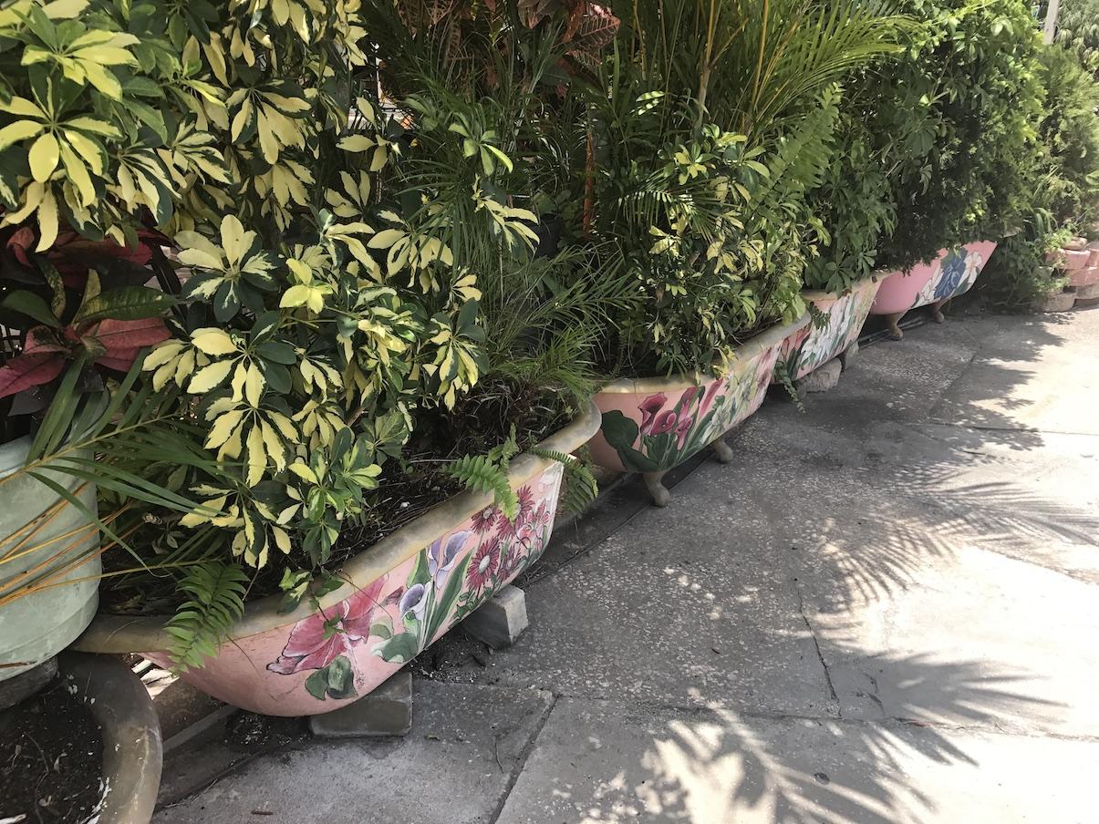 Bathtub gardening at the chattaway in St. Petersburg Florida