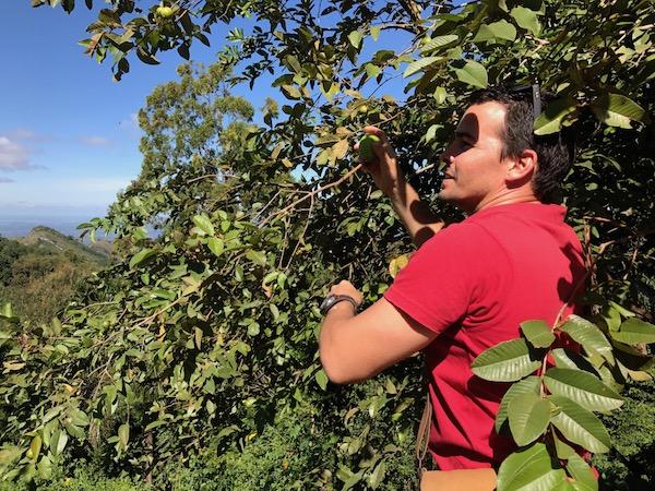 Fresh Fruit in Trinidad