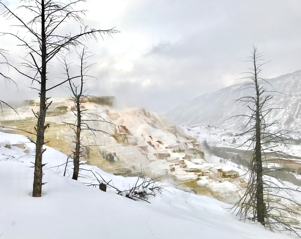 Mammoth Hot Springs Canary, Dryad Springs