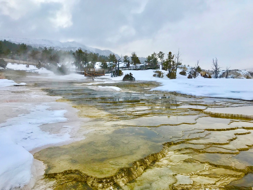 Mammoth Hot Springs Terraces Yellowstone National Park